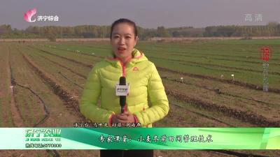 专家课堂:小麦冬前田间管理技术