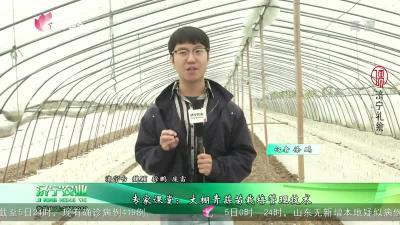 专家课堂:大棚青蒜苗栽培管理技术