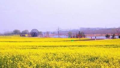 濟寧兗州:為鄉村振興注入新能量