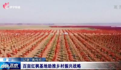 泗水县百亩红枫基地助推乡村振兴战略