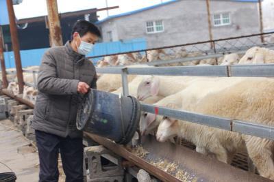 """乡村振兴产业先行 梁山""""扶贫""""良种羊""""远嫁""""新疆"""