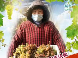 公益濟寧 | 3000斤葡萄打折促銷,急需愛心吃貨幫忙!