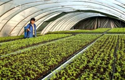 山東省級現代農業產業園創建名單公示,濟寧兩地入選