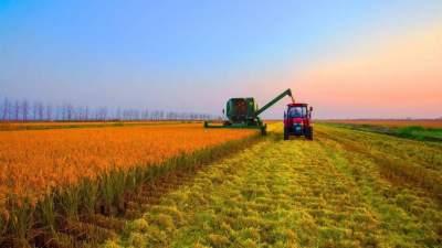 山东成为全国首个农业总产值过万亿元省份