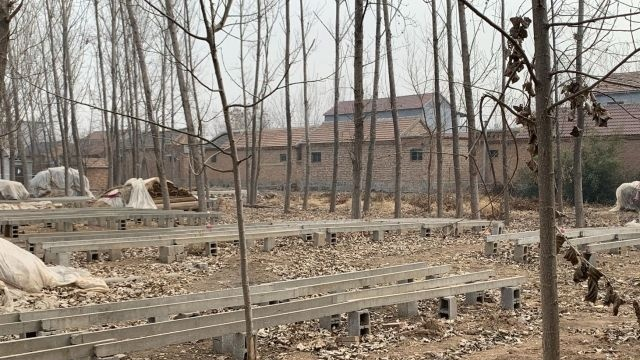 网友:村里建设冷库是否合法?官方回应来了