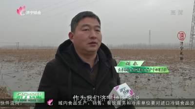 专家课堂:莲藕优质高效生产关键技术