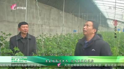 专家指导过寒冬 优质蔬菜保供应
