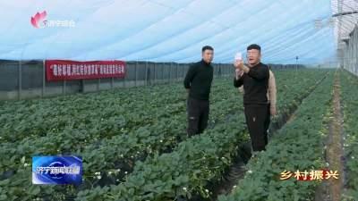 乡村振兴 | 济宁汶上:做精做细特色农业带动农民增收
