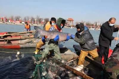 更濟寧 | 百魚騰躍 盛世歡歌 濟寧第六屆太白湖捕魚節開幕