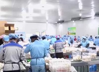 领航 | 邹城:强弱帮扶联建?壮大集体经济