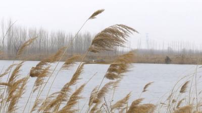 极危物种青头潜鸭现身南四湖保护区