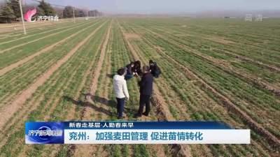兖州:加强麦田管理  促进苗情转化