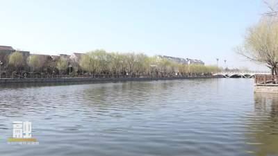 魚臺西支河河畔春風拂柳綠 蜂勤采蜜忙