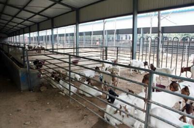 在自家耕地上建牛羊养殖场需要哪些条件?