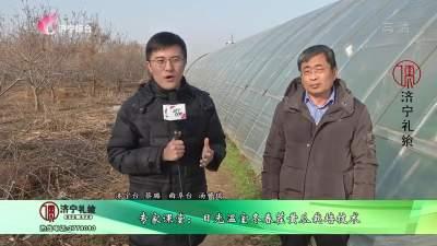 专家课堂:日光温室冬春茬黄瓜栽培技术