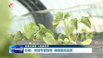 """任城甜瓜面积达2.5万亩 农技专家""""手把手""""引导确保瓜甜"""