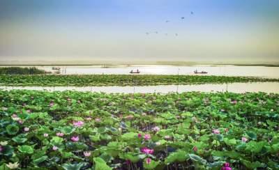 2021年山东将立法保护南四湖生态环境