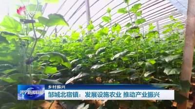 乡村振兴|邹城北宿镇:发展设施农业 推动产业振兴
