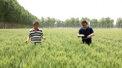 汶上现代农业发展势头强劲 助推乡村振兴