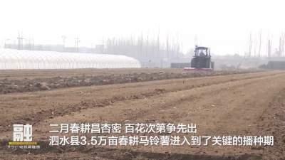 人勤春来早 泗水县3.5万亩马铃薯播种忙