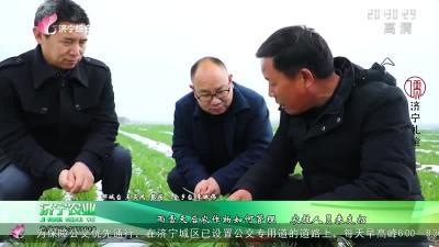 雨雪天后農作物如何管理 農技人員來支招