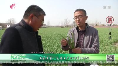 专家课堂:大蒜生产田间管理措施