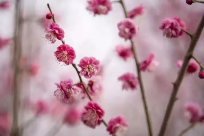 阳光和煦花开正好,太白湖新区赏花攻略请您查收