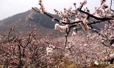 春天来啦,想去赏花?曲阜赏花地图拿走不谢