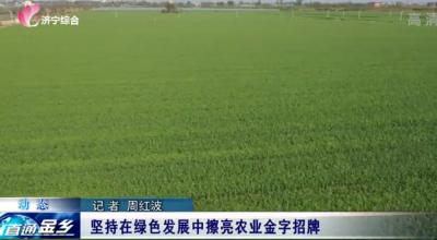 金鄉縣堅持在綠色發展中擦亮農業金字招牌