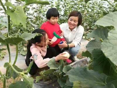 金鄉1.8萬畝白梨瓜上市 瓜農人均可增收6000元