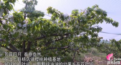 汶上县杨店镇突出地域特色 发展特色农业