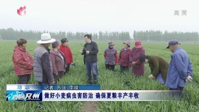 做好小麥病蟲害防治 確保夏糧豐產豐收