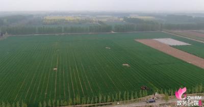 兗州:做好小麥病蟲害防治?確保夏糧豐產豐收