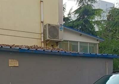 幼儿园使用泡沫彩钢板搭建屋顶存隐患 部门:责令整改