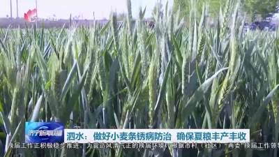 泗水县做好小麦条锈病防治 确保夏粮丰产丰收