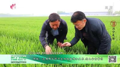 邹城:近期降水利于农作物播种和生长 病虫害需警惕