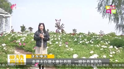 爱尚旅游-20210416