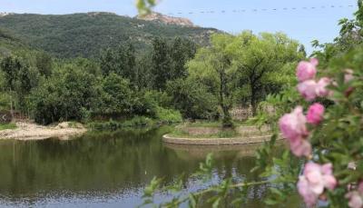 曲阜吴村镇:环境提升巧安排 绿水青山迎客来