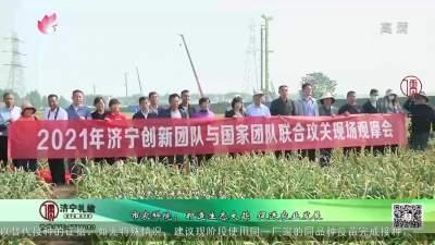 市農科院:打造生態大蒜 促進農業發展