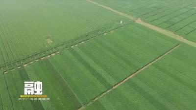 """""""水肥一体化""""新技术助力农业节本增收"""