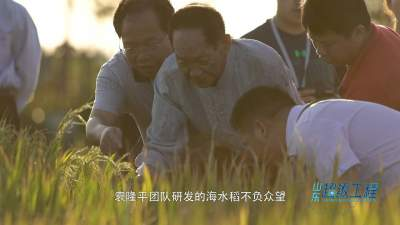 袁隆平和他的海水稻梦:千亩滩涂化良田 盐碱地里飘稻香