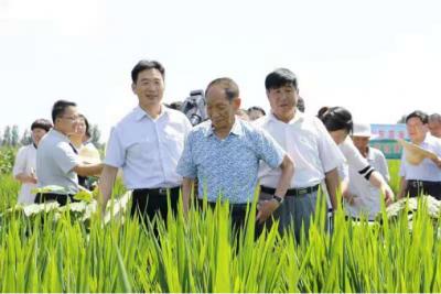 齐鲁频道六年记录袁隆平院士的海水稻情缘