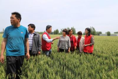 济宁市农科院在嘉祥县梁宝寺镇开展农技宣传服务活动