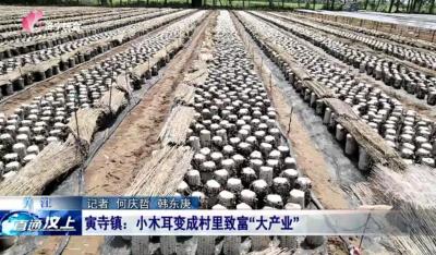 汶上县因地制宜发展种植木耳 打造富民兴民新产业