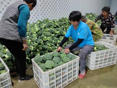 曲阜建设多元化现代农业产业园 增添乡村振兴新动能