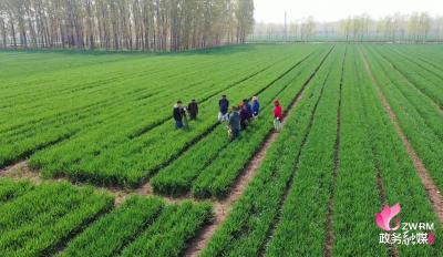 兖州新兖镇建设全国农业产业强镇