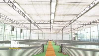 """邹城:""""工厂化循环水养殖""""促渔业转型"""