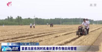 泗水县紧抓当前有利时机 做好夏季作物田间管理