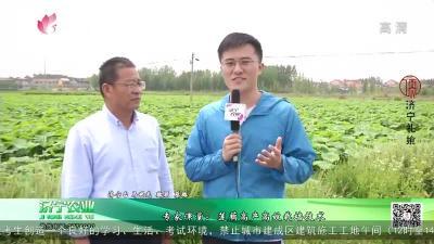 專家課堂:蓮藕高產高效栽培技術