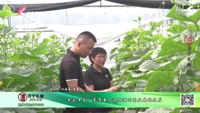 專家課堂:夏季黃瓜遮陽避雨高效栽培技術